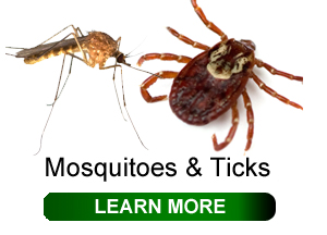 board of health - ticks and mosquitoes.jpg